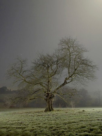 Nocturnal Arboreal. Night time tree portraits.
